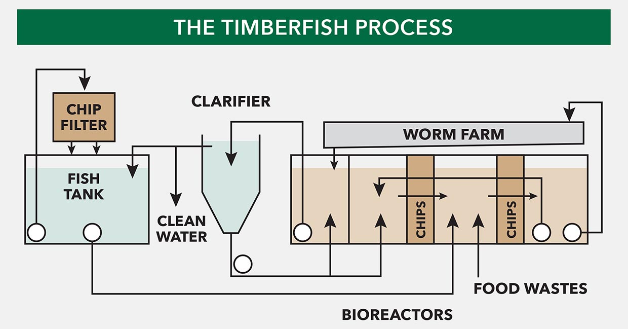 The-TimberFish-Process